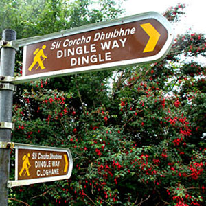 The-Dingle-way-web