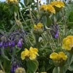 Gretas-Herbs-6