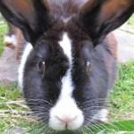 Rabbits Annascaul