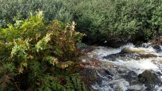 River Annascaul